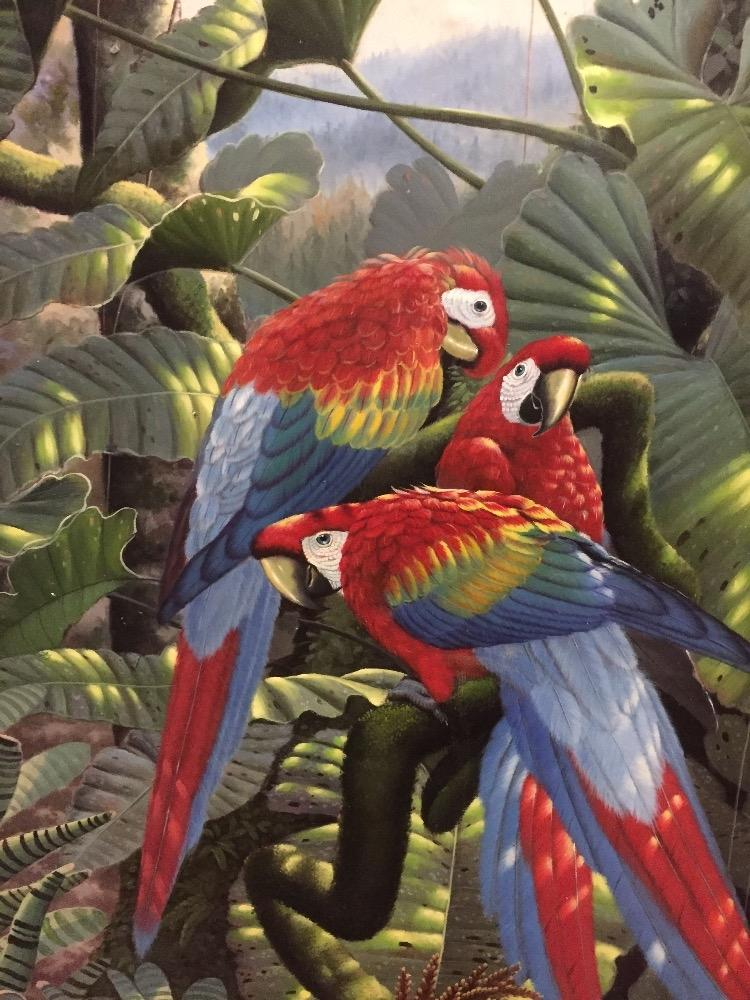 Parrots in the forest