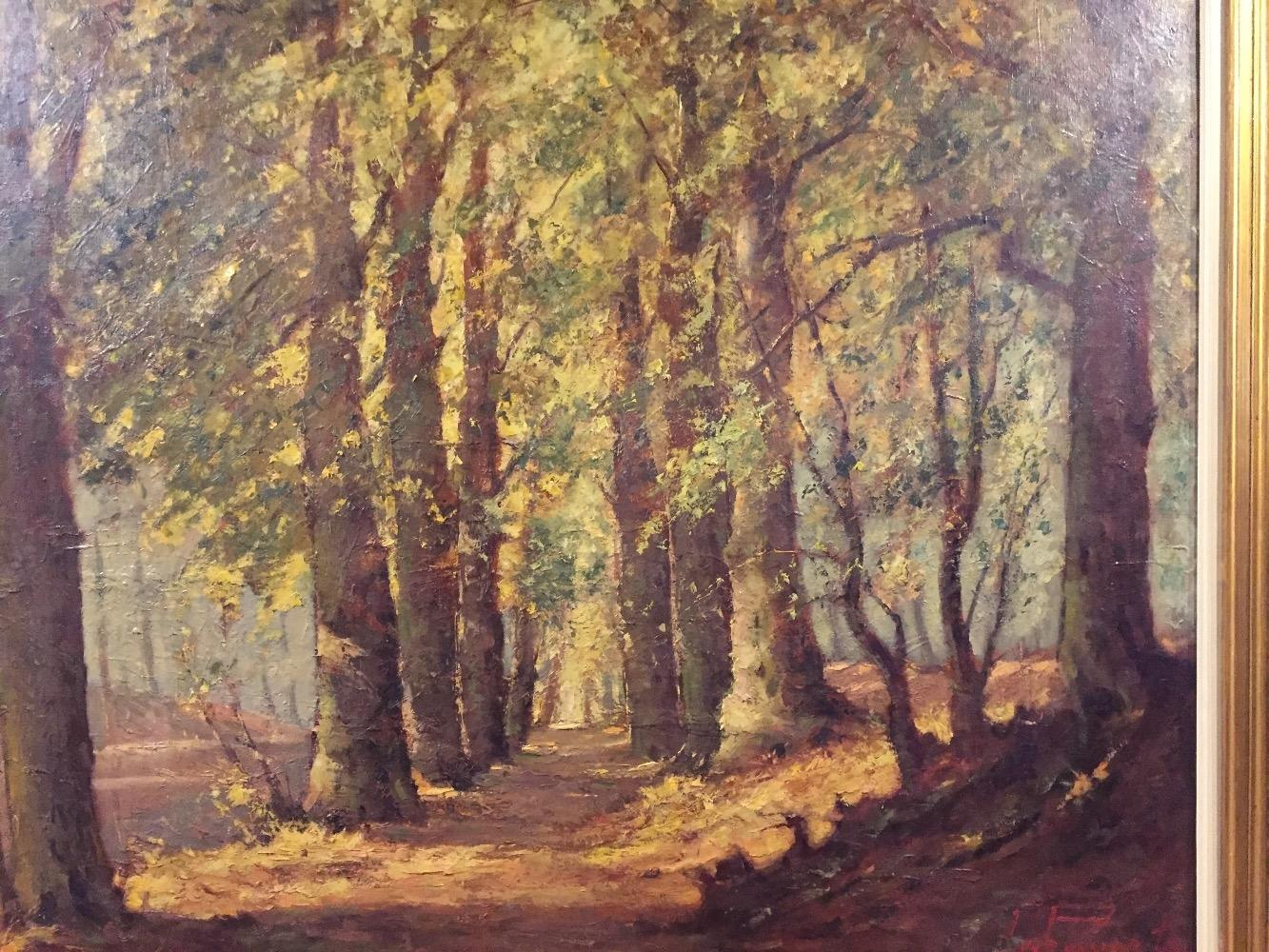 Forest in the summertime