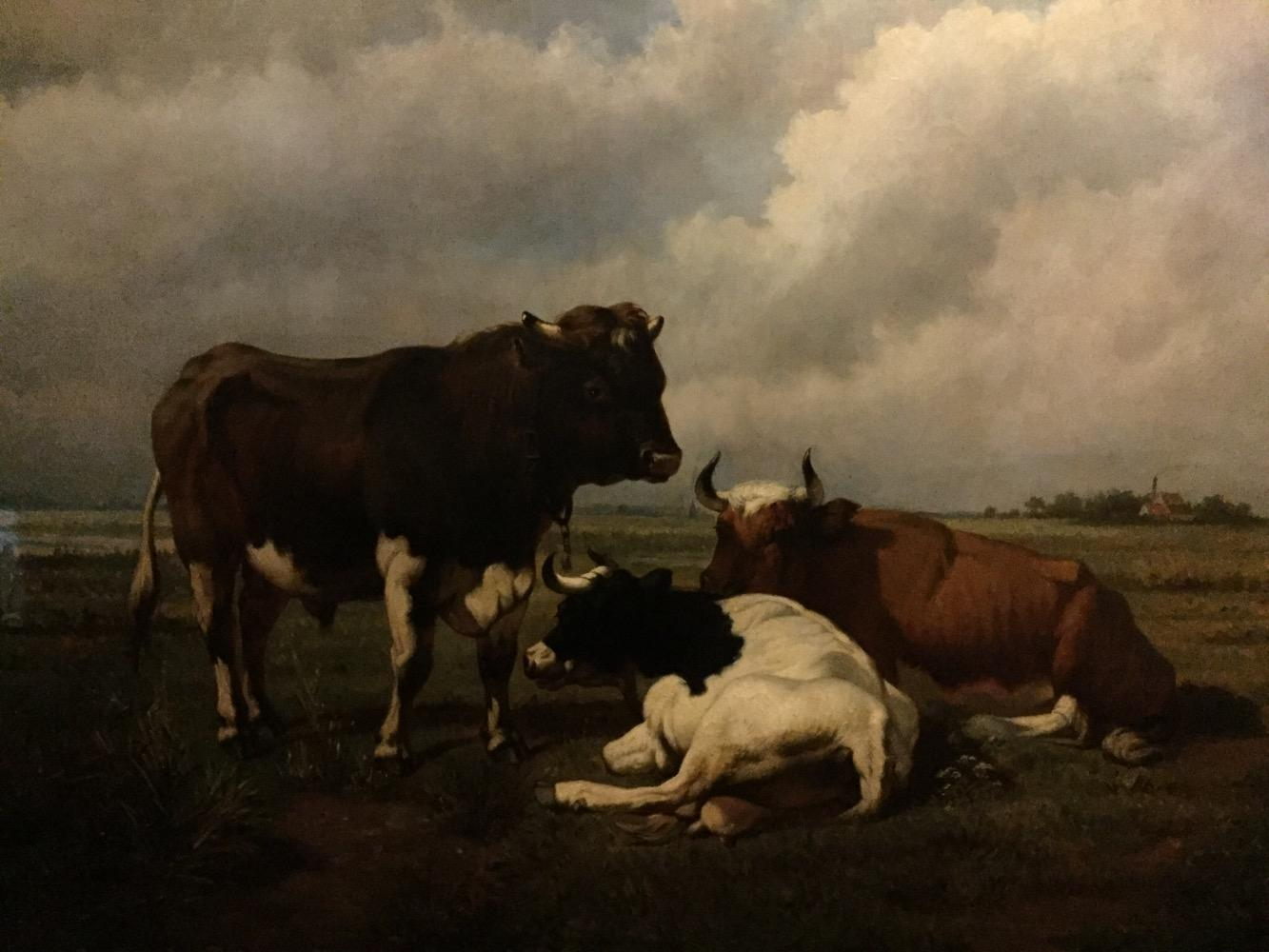 Bull with cows